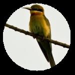 Todas son buenas chicas │ Reseñas. El pájaro verde, Lorena Álvarez